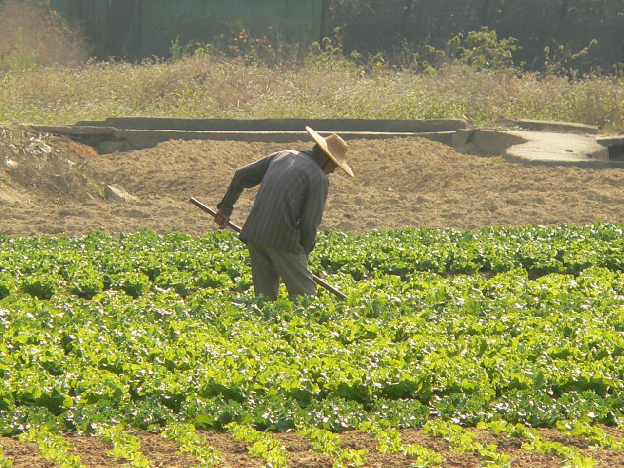070206_Sheung-Shui_Ying-Pun_Farmer-in-Field_2